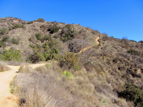 Photo: View north on Garcia Trail. Much of the vegetation sports its winter gray.