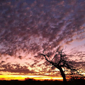 Sunset behind the dunes by Clarissa Human - Landscapes Sunsets & Sunrises ( clouds, sunset, sunsets, australia, cloudscape, colours,  )