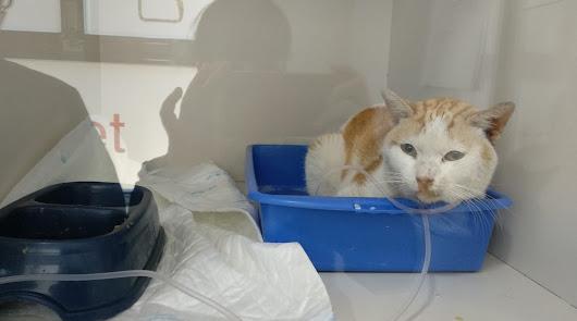 Envenenan a cinco gatos de una colonia en el Barrio San Luis