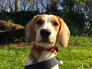 Photo: Jess Beagle, 8 months