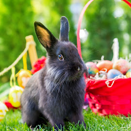 sweet easter rabbit by Grigor  Ivanov - Public Holidays Easter ( furry, little, easter eggs, vibrant, yellow, egg, sky, nature, rabbit easter, grass, white, fun, easter bunny, mammal, holiday, season, day, natural, small, rabbit, concept, colorful, cute, pretty, spring, farm, easter egg, happy, tradition, fur, baby, animal, bunny, april, green, beautiful, traditional, young, field, easter, red, fluffy, blue, pet, background, meadow, ears, summer, celebration, design )