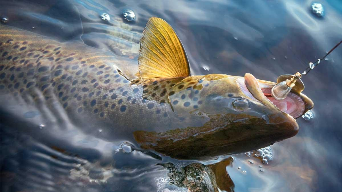 Trout Fishing Basics for Beginners