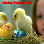 Chicken Wallpaper New APK icon