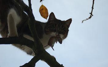 Photo: Myszy nie mają szans. Tudzież nornice- jak na zdjęciu;)