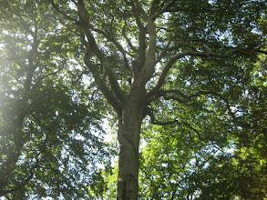 Photo: Beautiful tree being!....