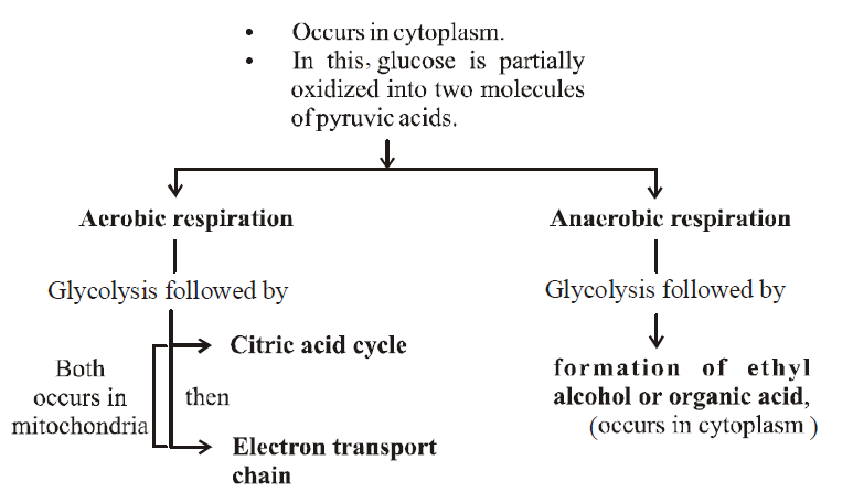 Respiration In Plants Biology Notes For Neet Aiims Jipmer