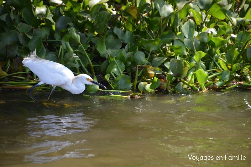 Egret swamp tour
