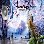Masteran Burung Suara Alam