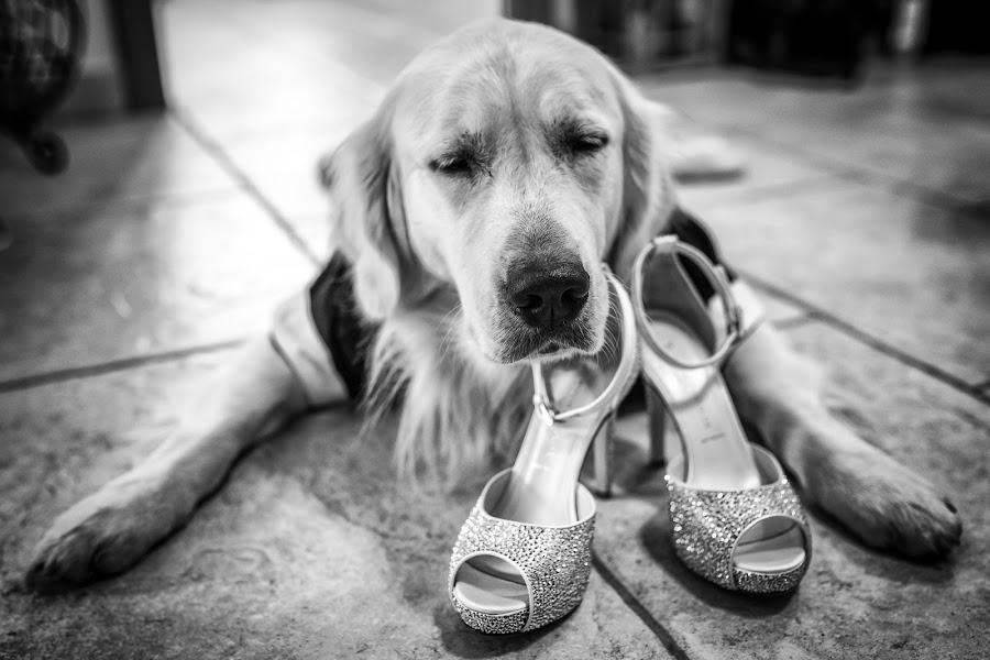 Wedding photographer Barbara Fabbri (fabbri). Photo of 20.09.2017