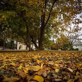 by Vaska Grudeva - City,  Street & Park  City Parks (  )
