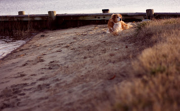 Photo: I'm a Regular Here | Our beloved pup, Honey, relaxing after a romp at our community marina © 2011 Ryan Lynham