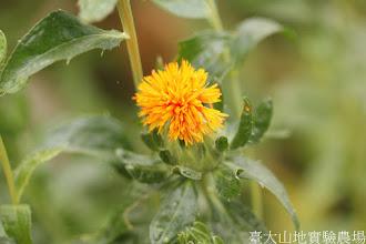 Photo: 拍攝地點: 梅峰-溫帶花卉區 拍攝植物: 紅花 拍攝日期: 2015_11_13_FY