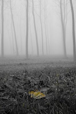 Una nota di colore in un bosco nebbioso. di FANTASY