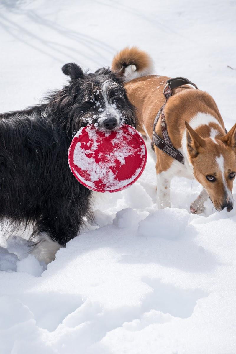 Giochi sulla neve  di Eli2019