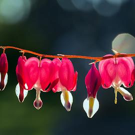 by Anngunn Dårflot - Flowers Flower Gardens