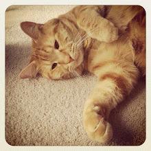 Photo: Another lazy cat #pet #cat #catstagram #catoftheday #animal #intercer #ilovecats - via Instagram, http://instagr.am/p/Mdck8FJfgl/