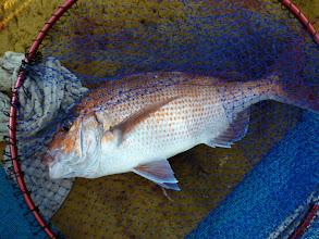 Photo: ・・・その後、沈黙の時間が長い。たまに「ポツン」と真鯛が喰うぐらいで。