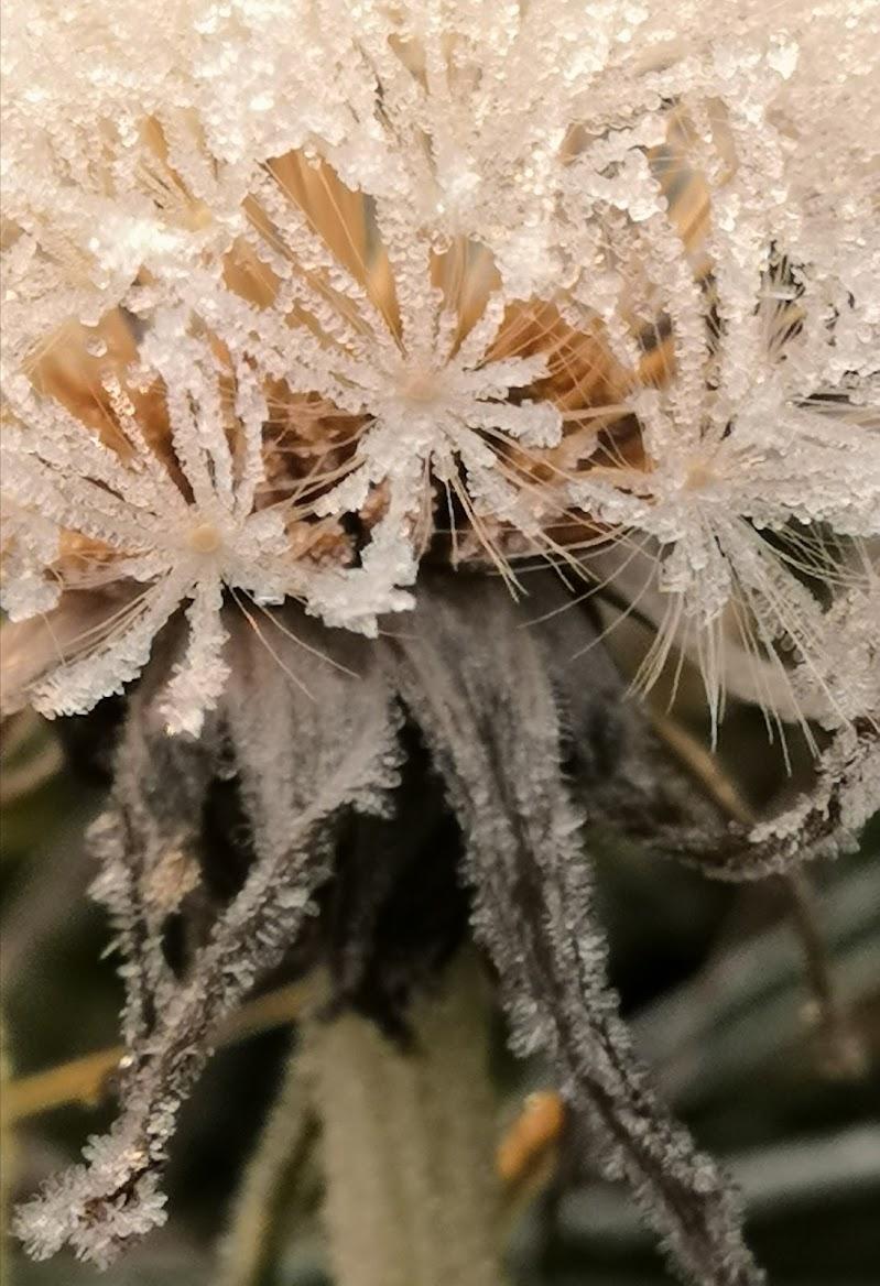 Soffione di ghiaccio  di patsie_1506