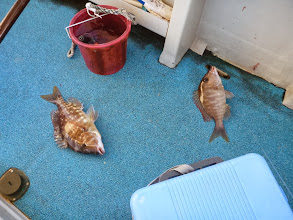 Photo: ・・・魚種がちがうけど。