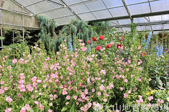 Photo: 拍攝地點: 梅峰-溫帶花卉區 拍攝日期:2012_07_24_FY