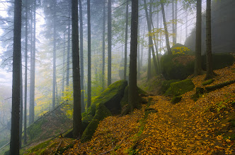 Photo: I upload second picture today ;) This one is IMHO the best shot from the forest series.  #landscapephotography  +10000 PHOTOGRAPHERS around the World  #1000photographersaroundtheworld   #photoplusextract by +Jarek Klimek  +HQSP Landscape  #hqsplandscape   #germany  #saxony  #saxonswitzerland  #autumn