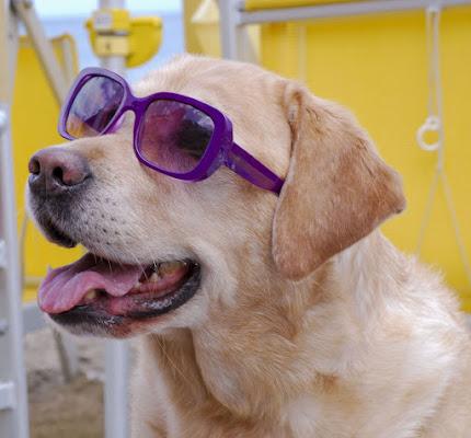 the kitsch dog di Zerosedici