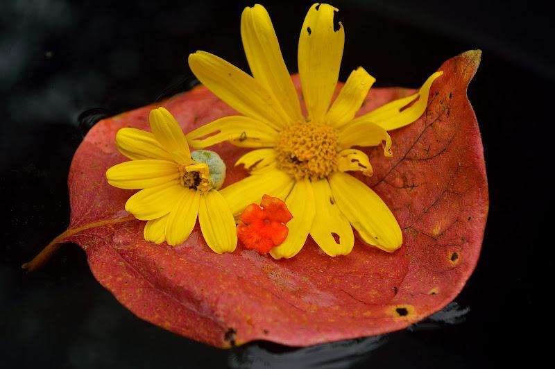 l'ordine dei fiori di vicky.serra.90