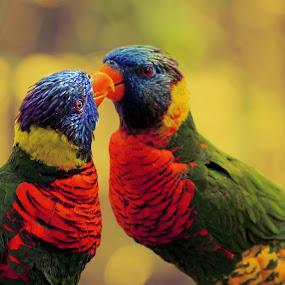by Asya Atanasova - Animals Birds (  )