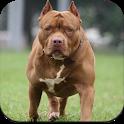 Pitbull Dog Wallpaper 4K icon