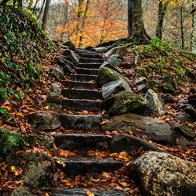 Autumn in the Smokies by Richard Michael Lingo - Landscapes Forests ( smoky mountains, north carolina, autumn, forests, landscape )