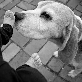 Friends by Brett Florence - Animals - Dogs Portraits ( friends, baby, dog )