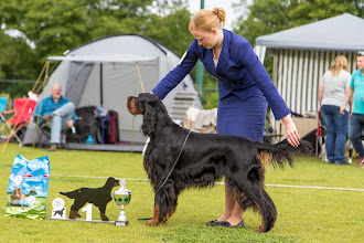 Photo: Openklas reuen / Openclass dogs - Bournefield IveArrived