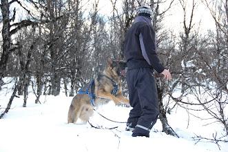 """Photo: Cato prøve å finne ved til bålet, Ask """"hjelper til""""..."""