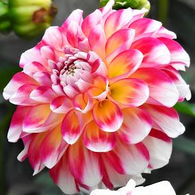 Podzimní květ by Věra Tudy - Flowers Single Flower