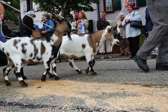 Photo: Ziegen unter sich