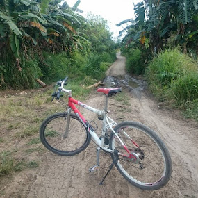 Davilan Trails by Florante Lamando - Transportation Bicycles ( dirt road, forest, trails )