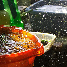 Raindrops by Pancho Sastre - Nature Up Close Water