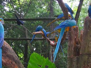 Photo: Some very noisy parrots