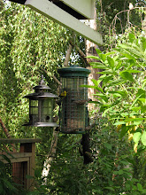 Photo: Day 6: Bird feeder at the Kangaroo House Bed and Breakfast. The birds kept us entertained during breakfast.
