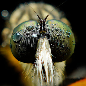 by Abgtamz Ally - Animals Insects & Spiders ( macro, art, nature up close, insects, eyes, animal )