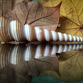 Leaves and seashell still life by Janette Ho - Artistic Objects Still Life