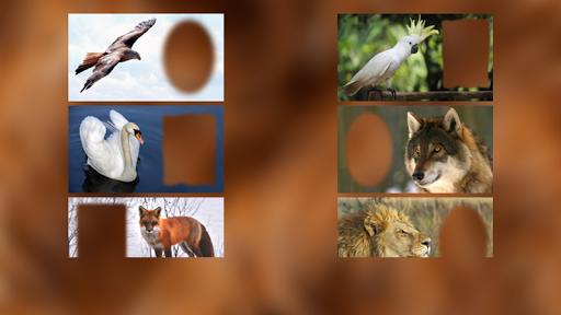 玩免費攝影APP|下載动物相框 app不用錢|硬是要APP