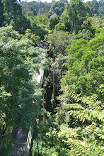 Photo: Canopy walk in Rainforest Discovery Centre