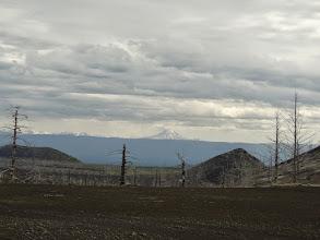 Photo: мертвый лес,оно и понятно. на заднем плане Кизимен