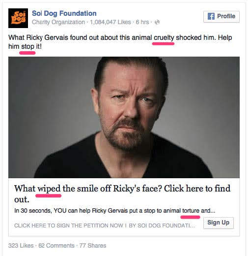 Soi Dog, an animal welfare nonprofit. Source: HubSpot