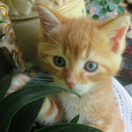Baby by Marcia Taylor - Animals - Cats Kittens (  )