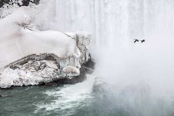 niagara ice goose di ©