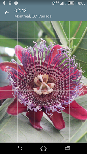 Jigsaw Puzzle: Flowers screenshot 3