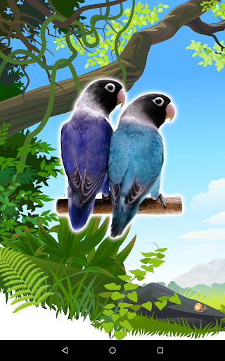 Lovebirds Unified Common