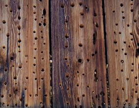 Photo: Makeshift Acorn Woodpecker granary in a barn, Hastings Reservation, Carmel Valley, California